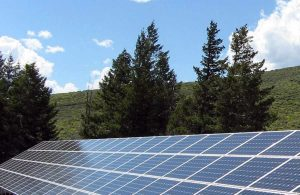 Tallahassee-Trees-and-Solar-Panels